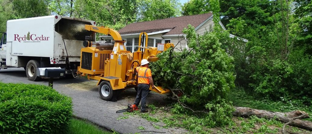 Tree Service Longmont CO